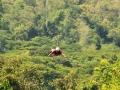 Inauguration and Opening of 1.4km Cable Zipline No. 2 (16)
